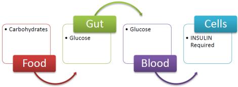 anabolic hormone meaning